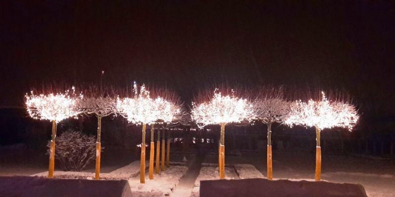 Новогоднее украшения деревьев